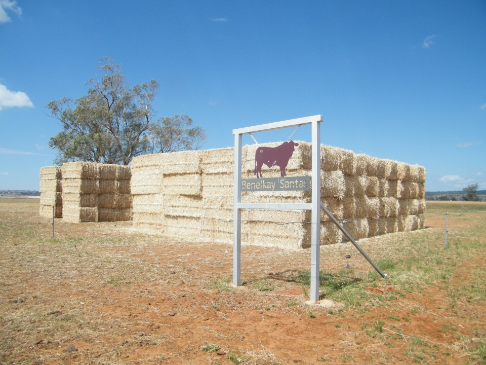Barley Stubble Hay